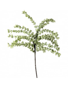 Eucalipto Verde Chiaro - I Fiori L'Oca Nera