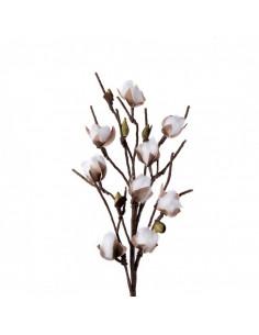 Fiore del Cotone - I Fiori L'Oca Nera